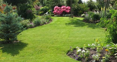 tondeuse, jardin, pelouse, tondeuse thermique